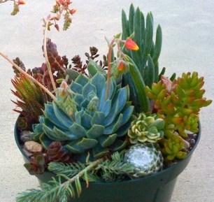 Fascinating Diy Terrariums Ideas To Try This Seasonl 09
