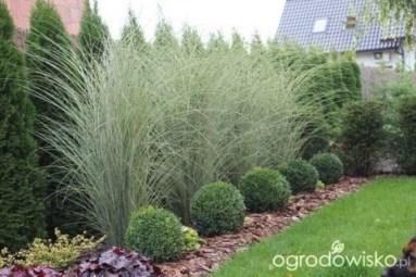 Newest Green Grass Design Ideas For Front Yard Garden 01