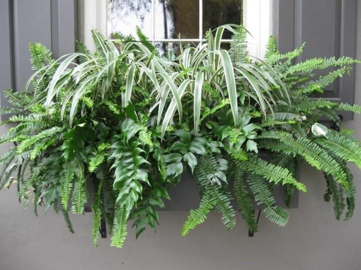 Unique Window Design Ideas With Plant That Make Your Home Cozy More 21