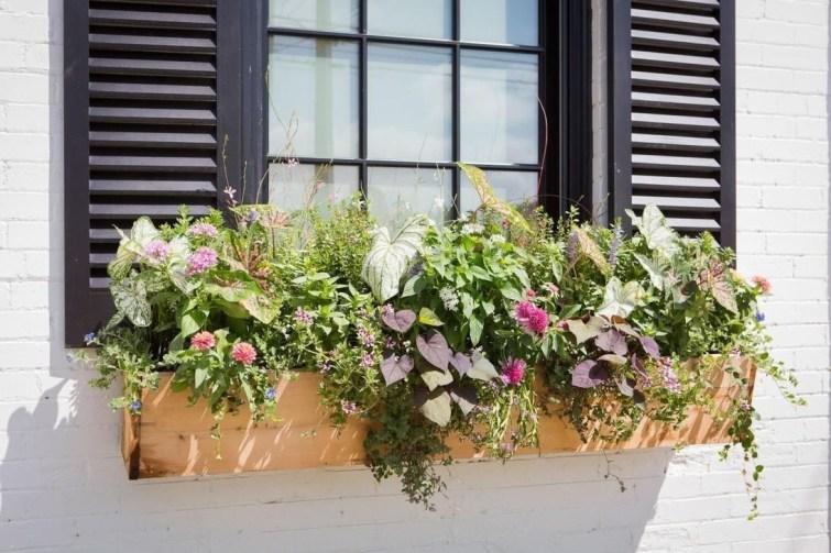 Unique Window Design Ideas With Plant That Make Your Home Cozy More 29