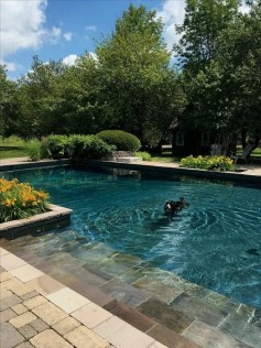 Cozy Backyard Swimming Pools Design Ideas To Copy Right Now 05