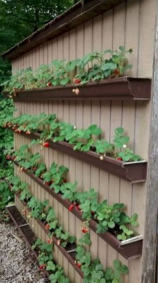 Rustic Small Backyard Design Ideas With Vertical Garden To Try Asap 06