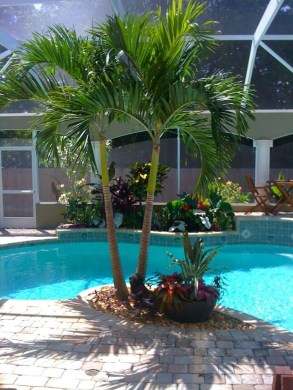 Surprising Tropical Pool Landscaping Design Ideas To Try Soon 09