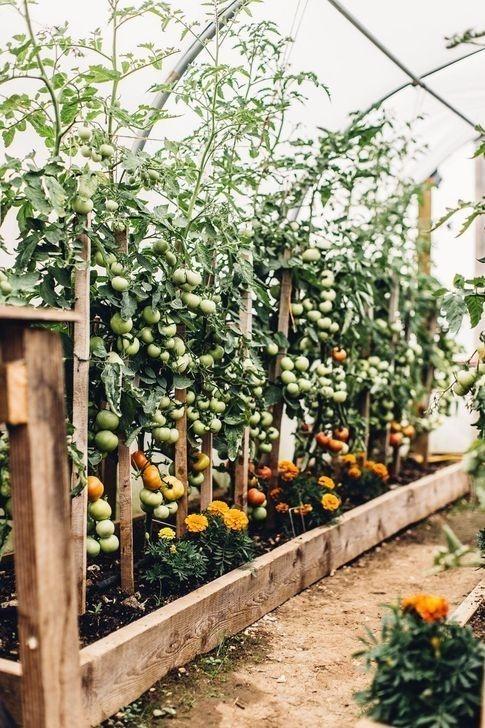 Rustic Vegetable Garden Design Ideas For Your Backyard Inspiration 37