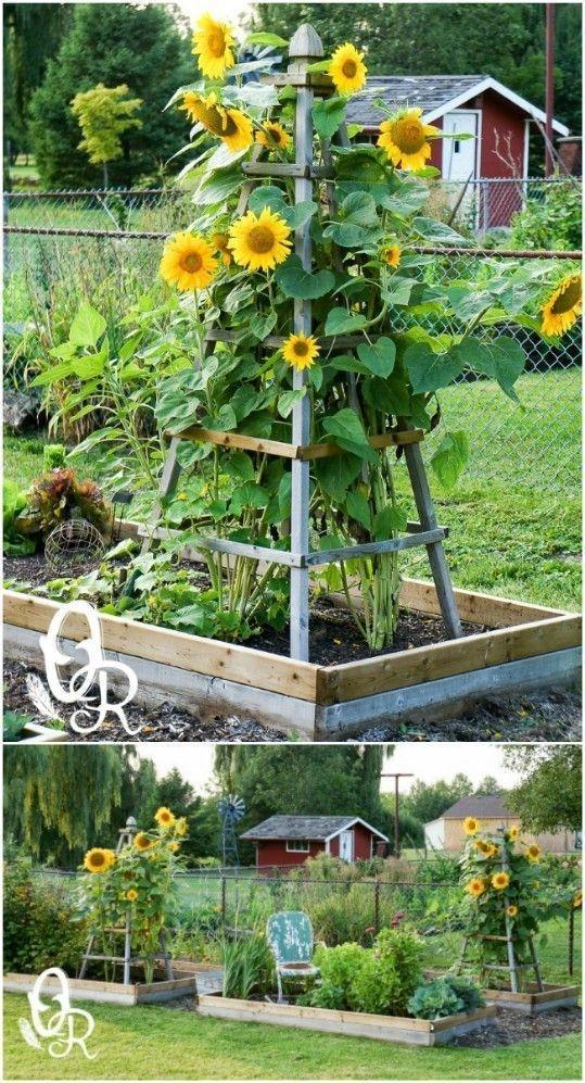 Rustic Vegetable Garden Design Ideas For Your Backyard Inspiration 41