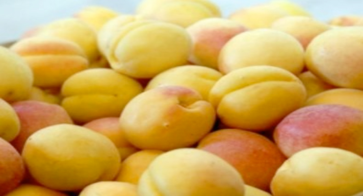 Apricot Export