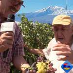 Meet 94-Year-old Armenian Grape scientist, Derenik Safaryan PhD. Conserving grape entire adult life, Video
