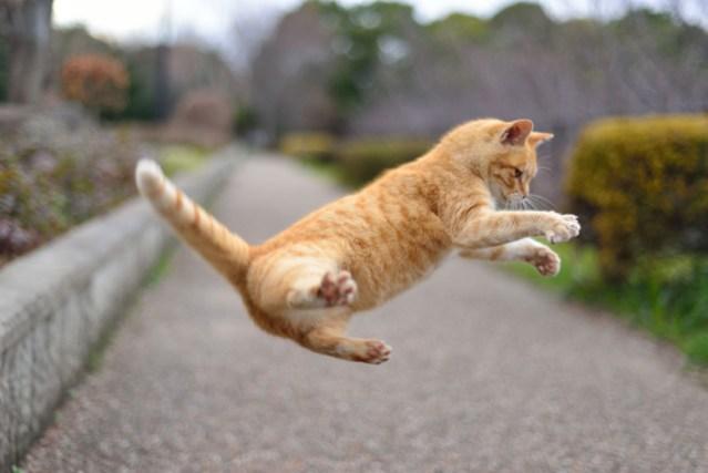 フリー写真 ジャンプする猫