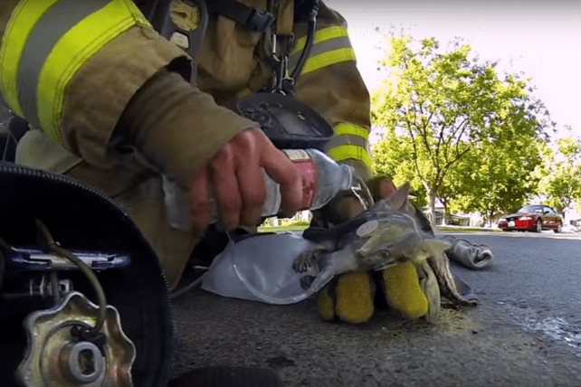 GoPro wants to find more audience-grabbing videos shot with its cameras like 'Fireman Saves Kitten.'