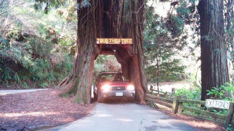 Tour Thru Tree, Klamath, CA 2