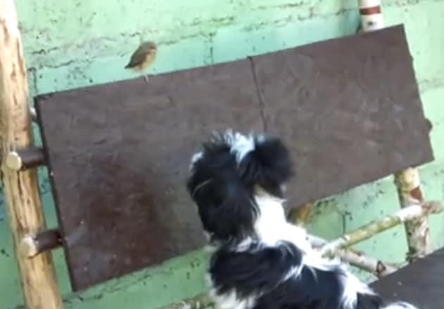 Moment d'amour entre un chien et un oiseau