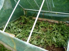 Comfrey leaves down