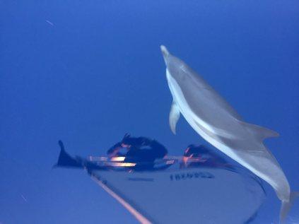 Delfíni jako odměna za noční plavbu