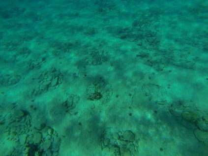 Petropavli pod vodou