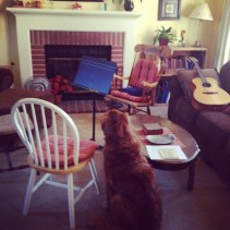 Mambo waiting eagerly for his favorite guitar student to arrive