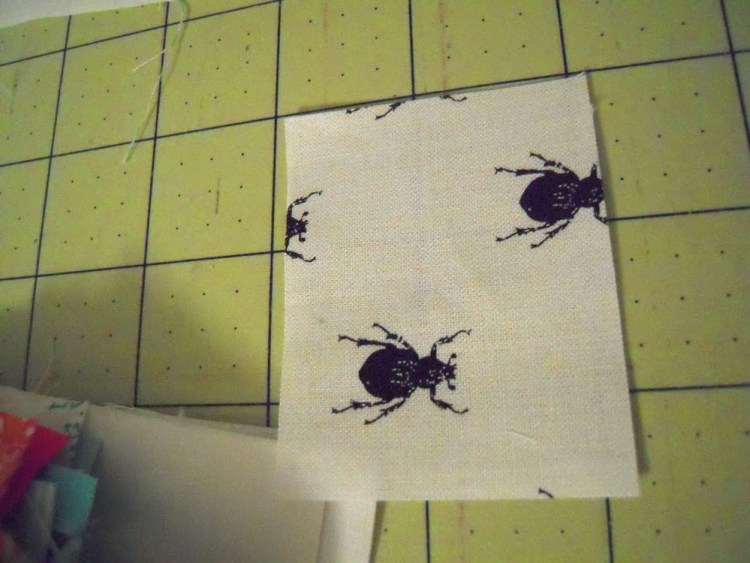 weevils on fabric
