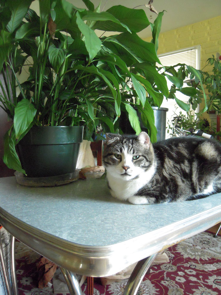 kitty with plant