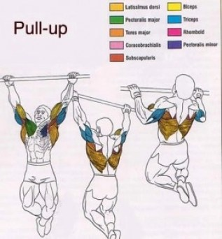 best upper body building exercise