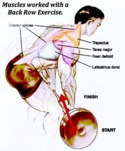 best upper body exercises