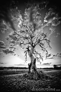 alone-dead-tree-country-highway-black-white-25846836