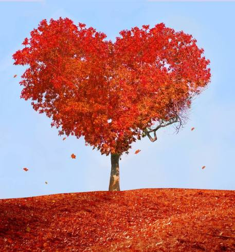 autumn-heart-tree-fall