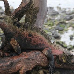 Die Ureinwohner Galapagos