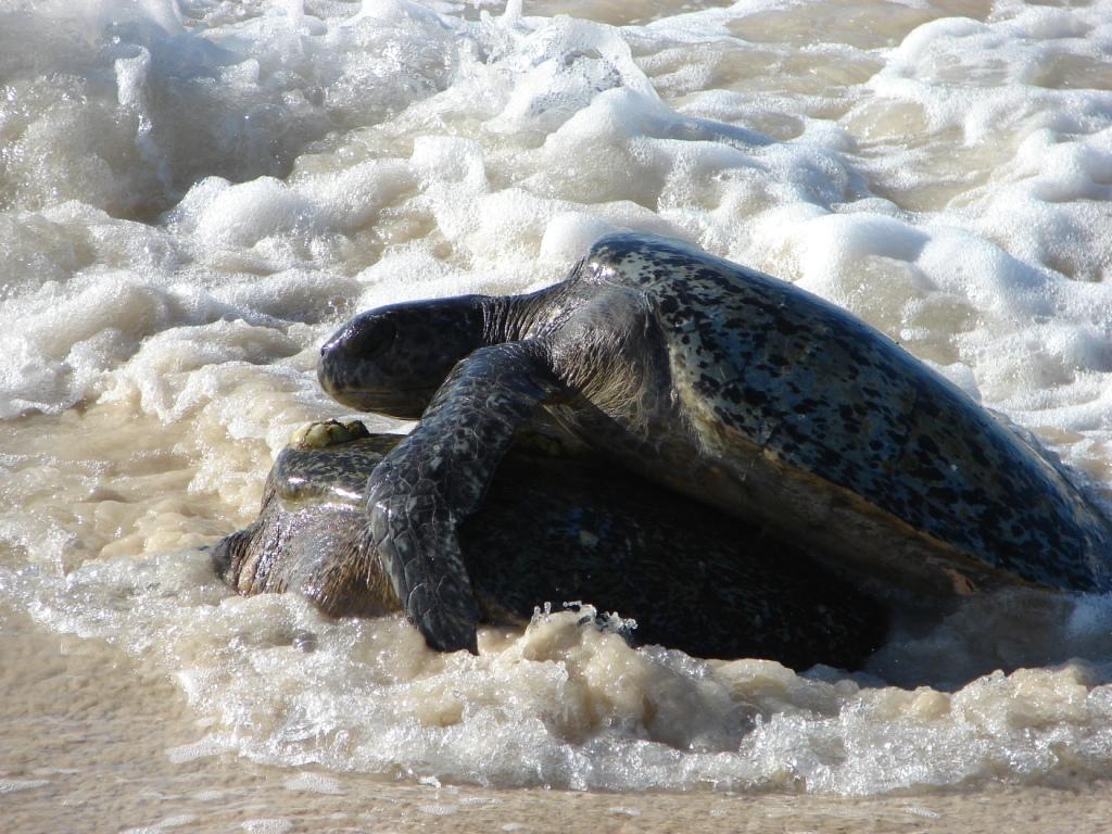 20090811_sea_turtles
