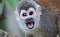 monkey-rainforest