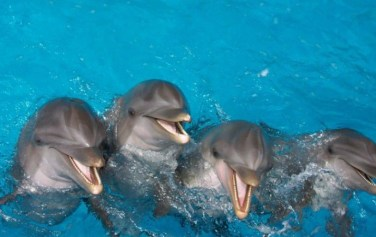 dolphins-720x454