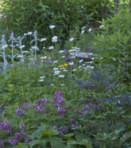 Herb garden at Clary Lake Bed and Breakfast. Purple flowers, white daisies and lambs ears amongst other greens.