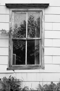 Black and White Window in old house with wisteria vine growing inside the house.