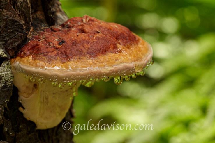Beads on Mushroom