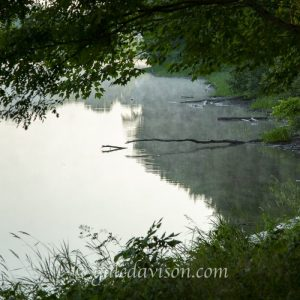 Shoreline of Kennebec River in Winslow, Maine along Rotary Centennial Trail. Green leaves of shoreline trees, reflection of trees in water and misty green blue water tones.