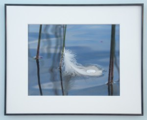 White feather floating on blue water cradles a large drop of water on its surface. Belgrade Lakes, Maine.