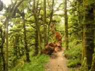 Green trees, New Zealand