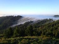 Throckmorton Ridge, Mt. Tamalpais