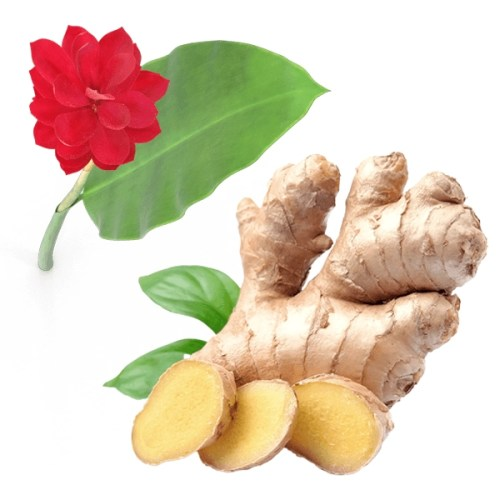 ginger-root-with-flower-600px