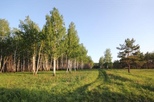 Весенний лес - Природа - Фото галерея - Галерейка
