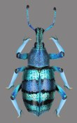 11-Escarabajo5