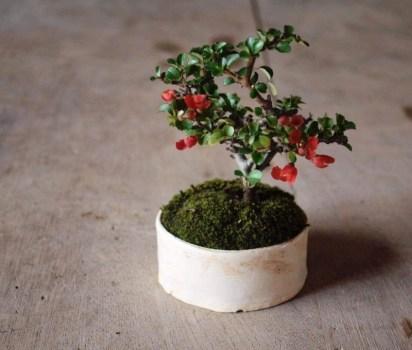 榊麻美植物研究所「盆栽ワークショップ」