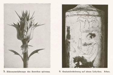 Moritz Meurer, Vergleichende Formenlehre des Ornamentes und der Pflanze, Verlag von Gerhard Kuhtmann, Dresden, 1909