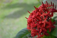 Red flower, rule of thirds
