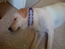 adopcion galgo, caollar galgo, collar perro, antiescape, seguridad, adopcion