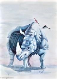 galigallery-rhino-6243