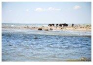 plaja salbatica-07