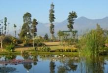 Wisata Kebun Mawar Situhapa