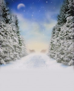 Alba 039 Winter Walk 4
