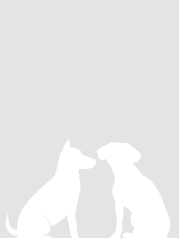 Hundenamen