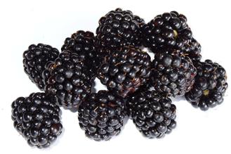 Blackberries_by_feiern1