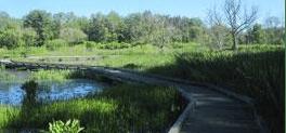 Habitat at Wingfield Pines